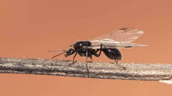 Cava de' Tirreni. La notte tra il 13 ed il 14 agosto disinfestazione da insetti volanti. Ecco le precauzioni da adottare