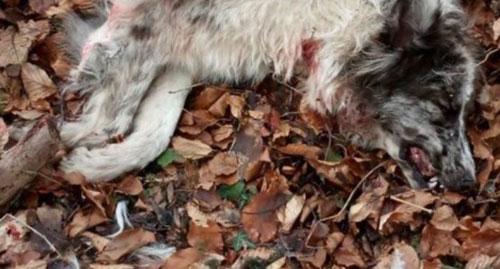 Quattro cani sbranati dal branco nelle frazioni di Cava, paura anche per i bambini